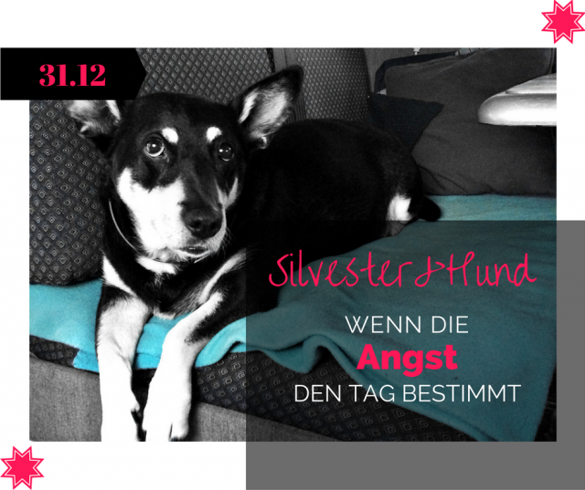Silvester, Womo, Hunde, Angst…ein Interview