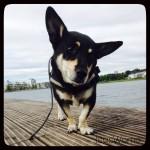 Hundemädchen Milla