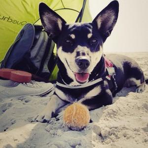 Campingurlaub mit Hund