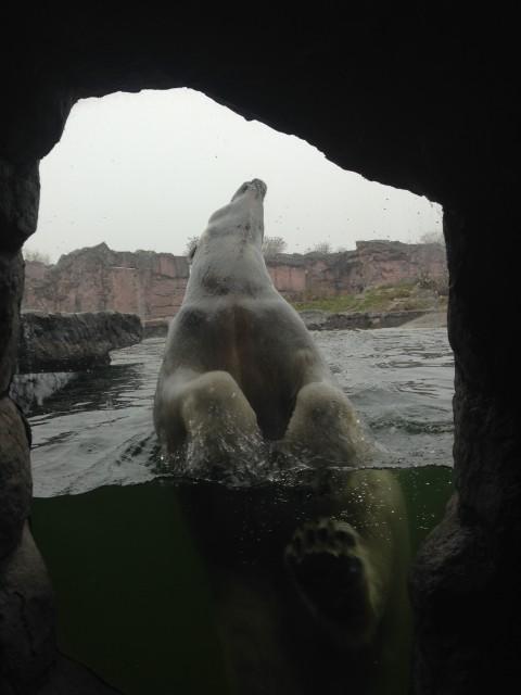 Eisbären Zoom Erlebniswelt