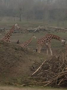 Giraffen Zoom Erlebniswelt