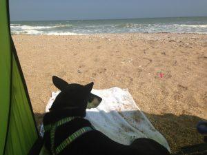 Camping mit Hund in Frankreich