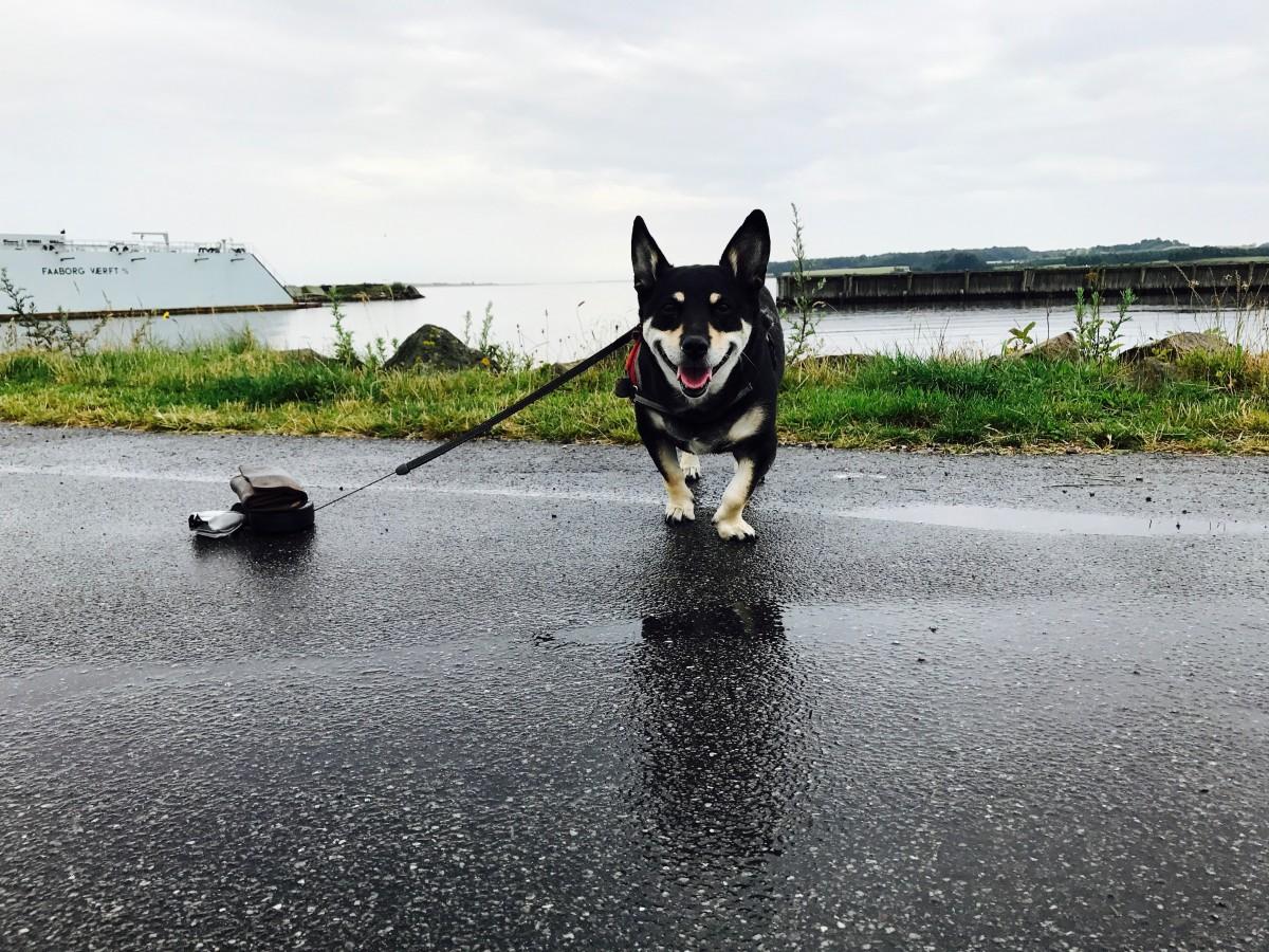 Dänemark mit Hund