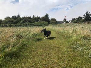 Hundeparadies Hadsund