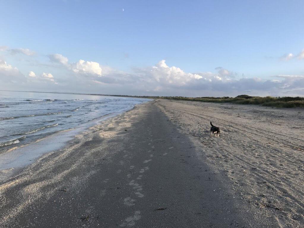 Mit Hund am Strand... bei solchen Stränden kein Problem!