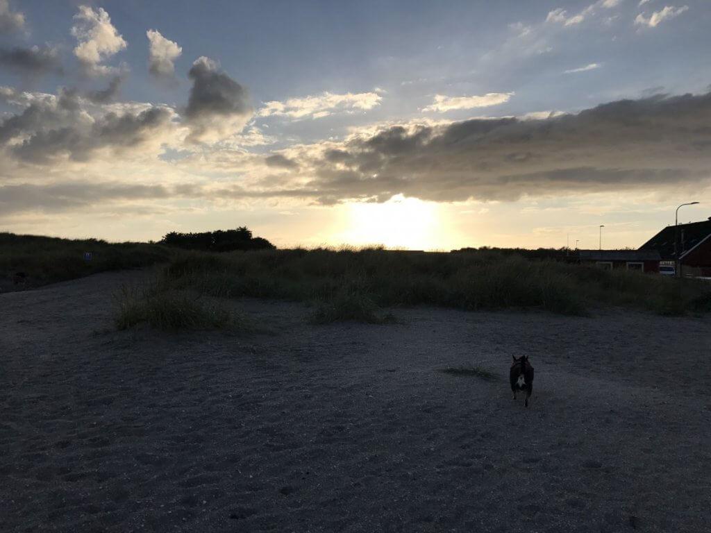 Mit Hund in Dänemark, Strand und Hund