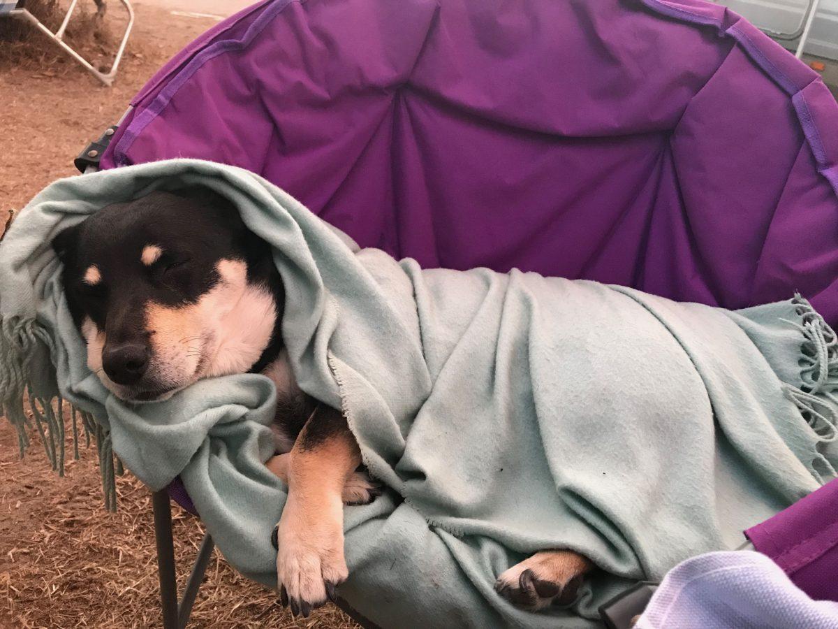 Camping mit alten Hunden