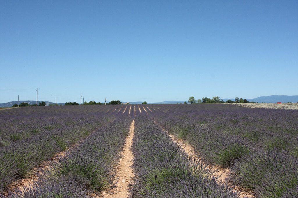 Wohnmobil Tour Südfrankreich Lavendel