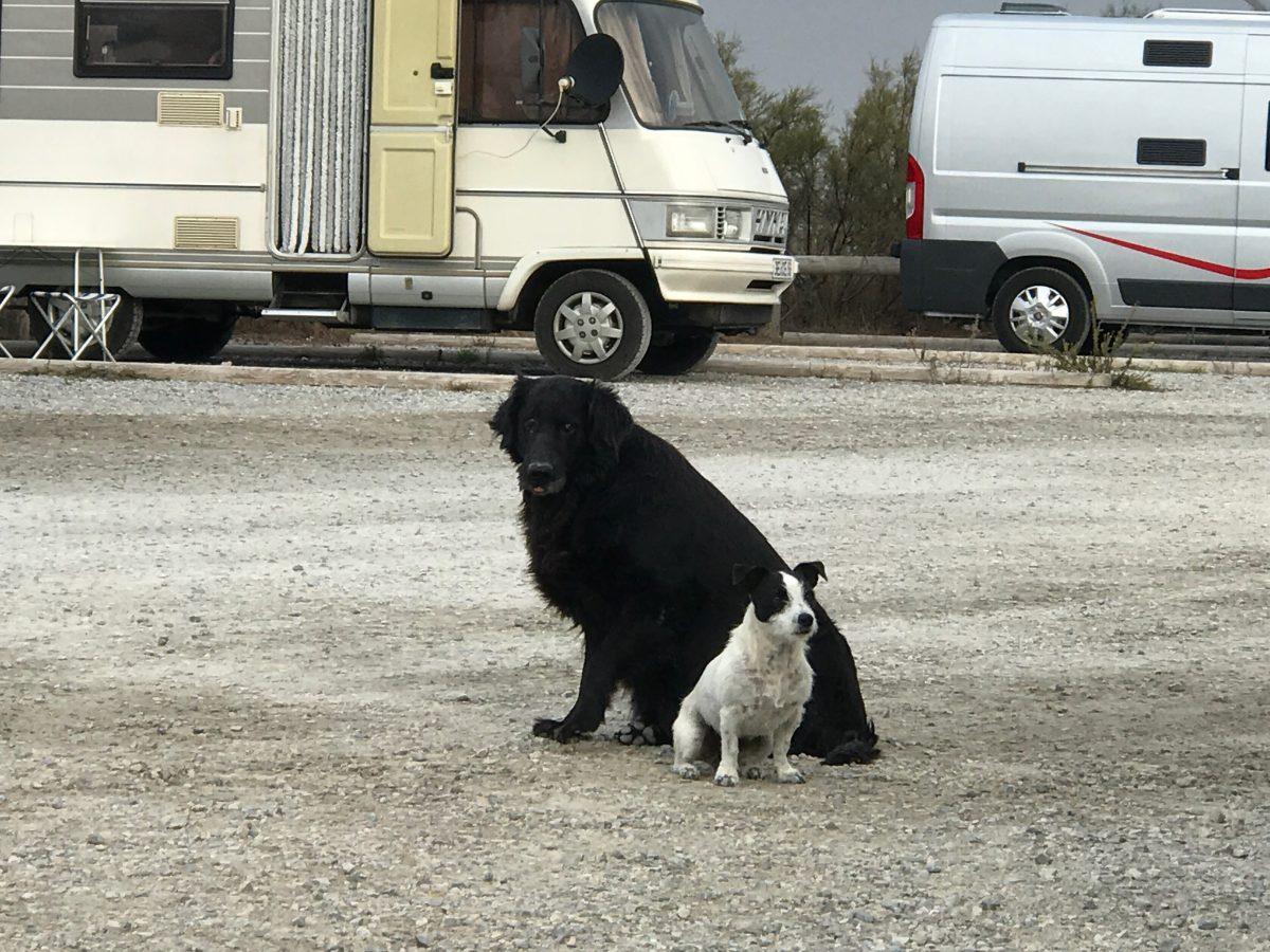 Clevere Strassenhunde auf unserer Südfrankreich Tour