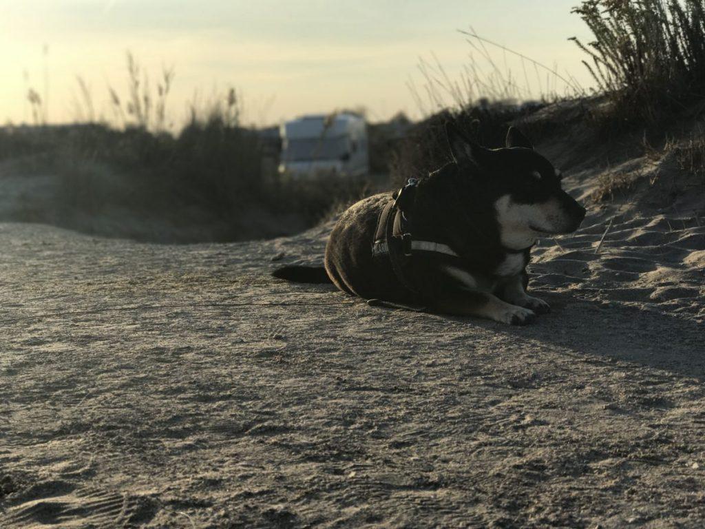 Wohnmobil Stellplatz Tipps mit Hund