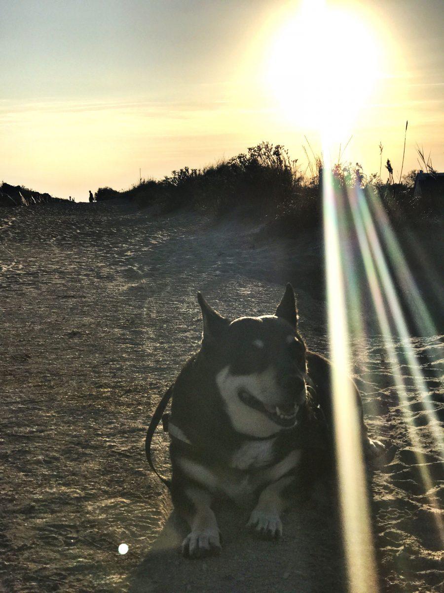 Mit Hund in Südfrankreich