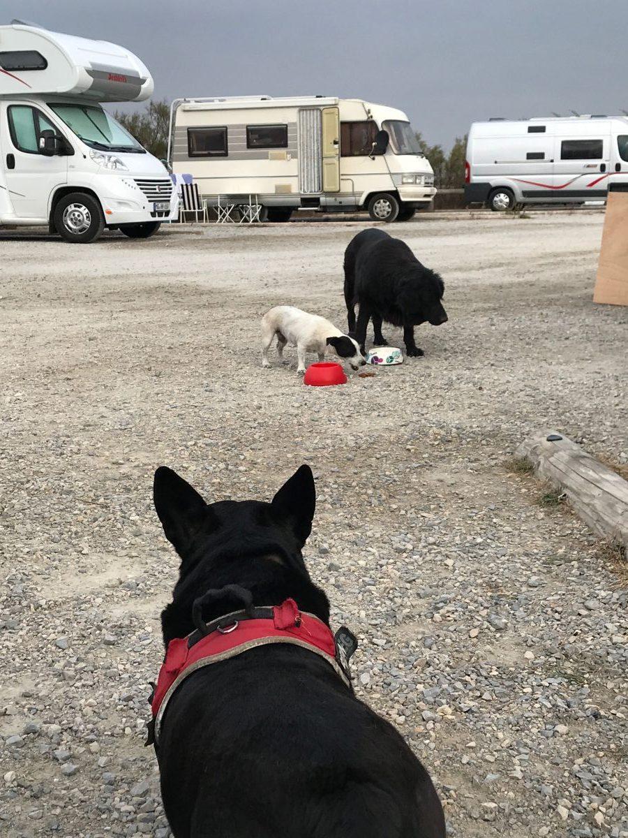 Begegnung mit Strassenhunden