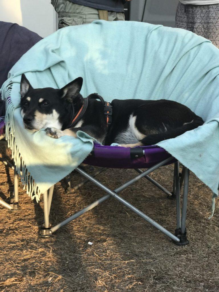 Road Trip mit einem alten Hund