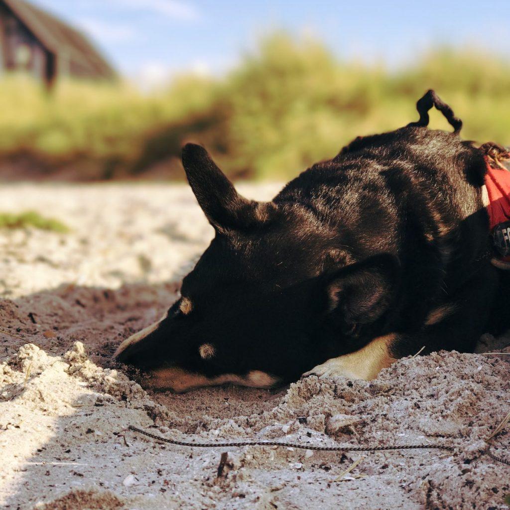 Camping mit einem alten Hund