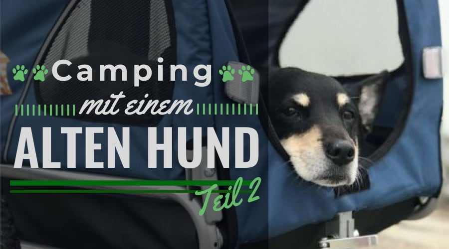 Der Sommer eures Lebens - Camping und Road Trip mit einem alten Hund