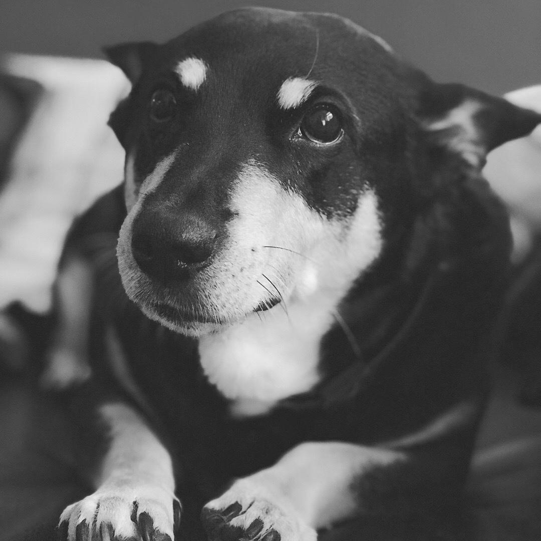 Was tun wenn der Hund auf reisen stirbt? Reisen mit einem alten Hund