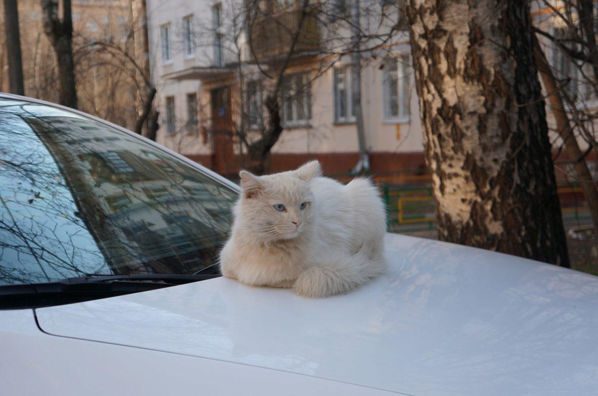 Reisen mit Katzen, Tipps zum reisen mit Katzen