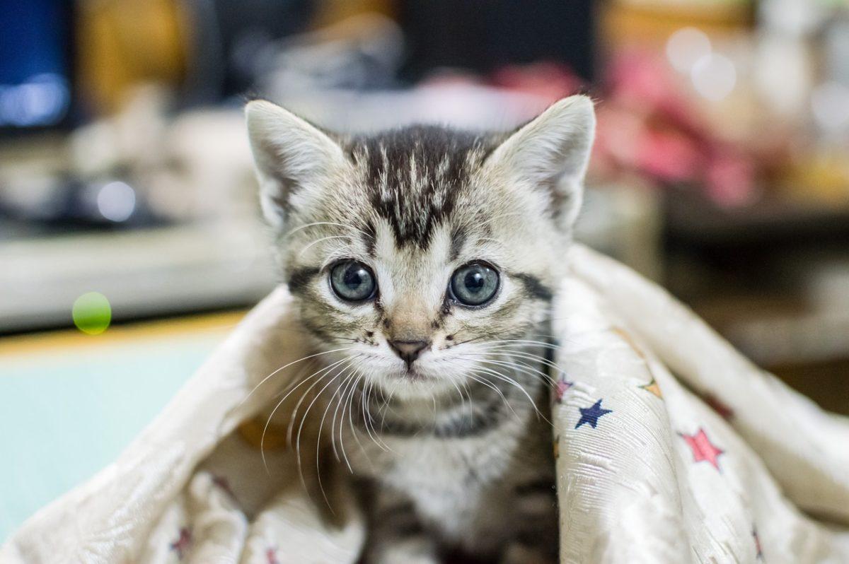 Reisen und Camping mit Katze