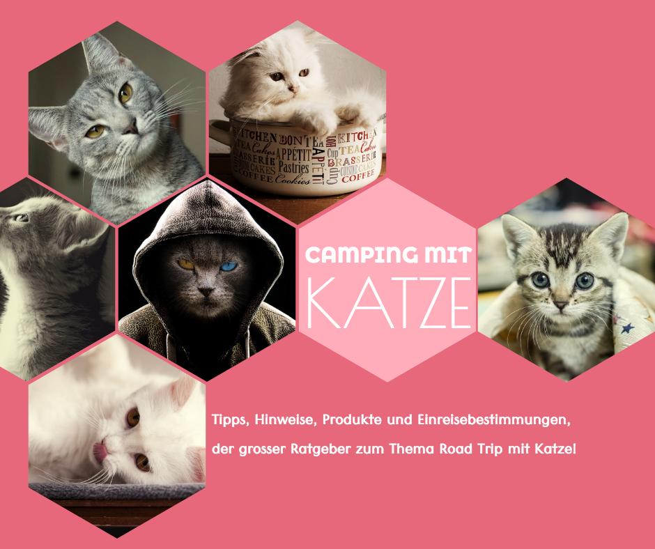 Camping mit Katze - Tipps, Rat und Einresebestimmungen