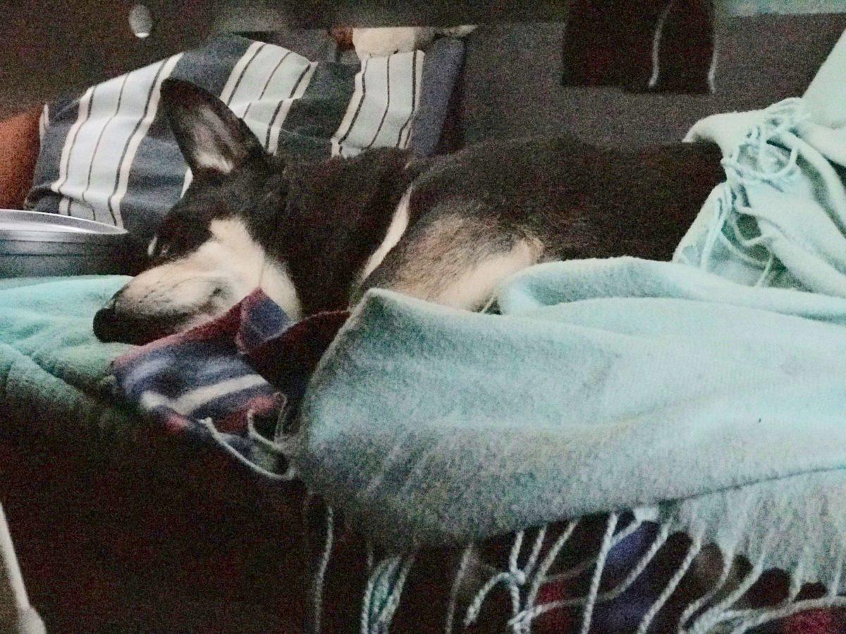 Camping mit Hund im Wohnmobil