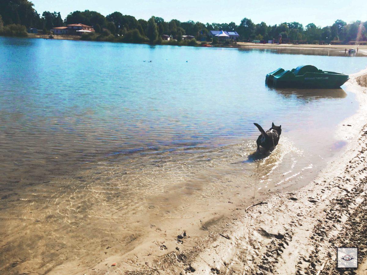 Hundefreundliche Campingplätze in Niedersachsen