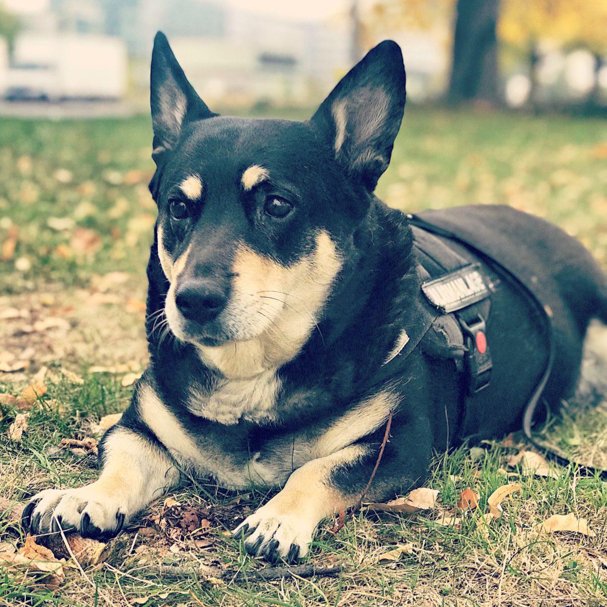 Mit Hund und Wohnmobil in Dresden