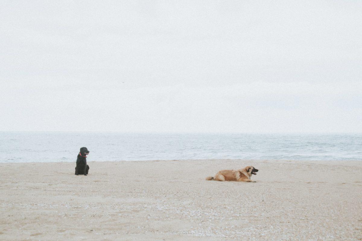 Geschenke für Hund und Herrchen auf reisen