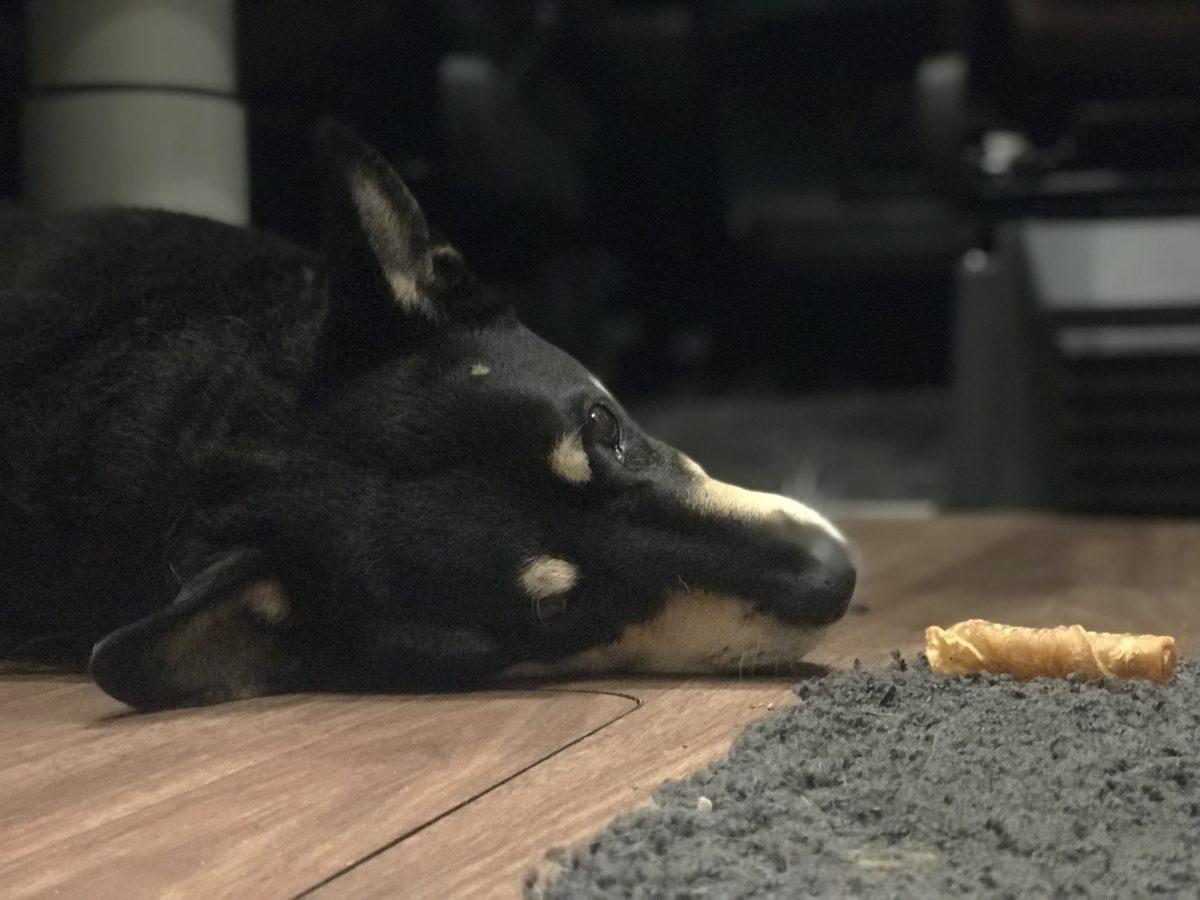 Wintertage im Wohnmobil mit Hund