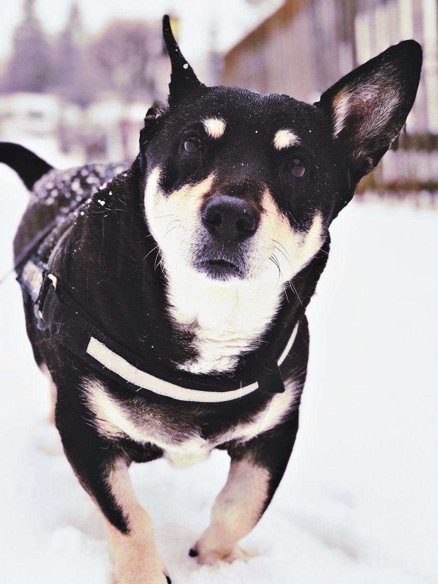 Wintercamping mit Hund