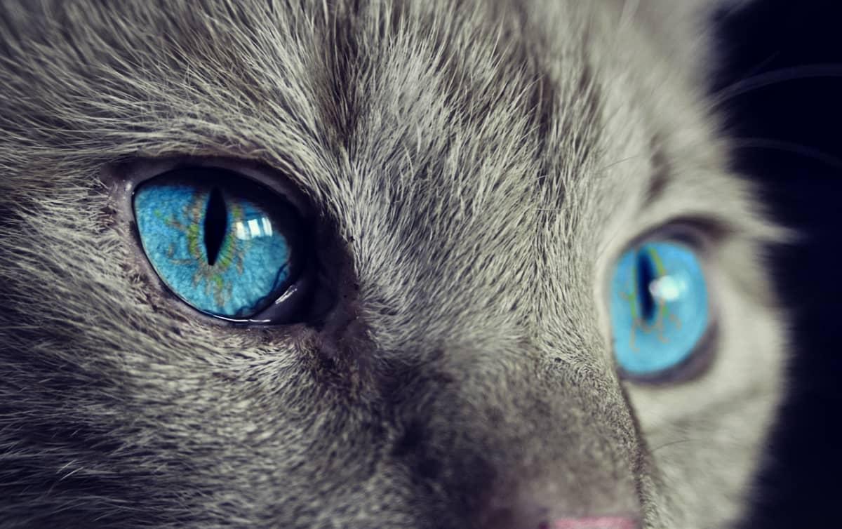 Campen mit Katze im Wohnmobil und Wohnwagen