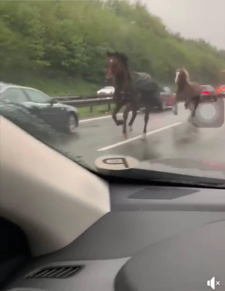 Pferde auf der Autobahn