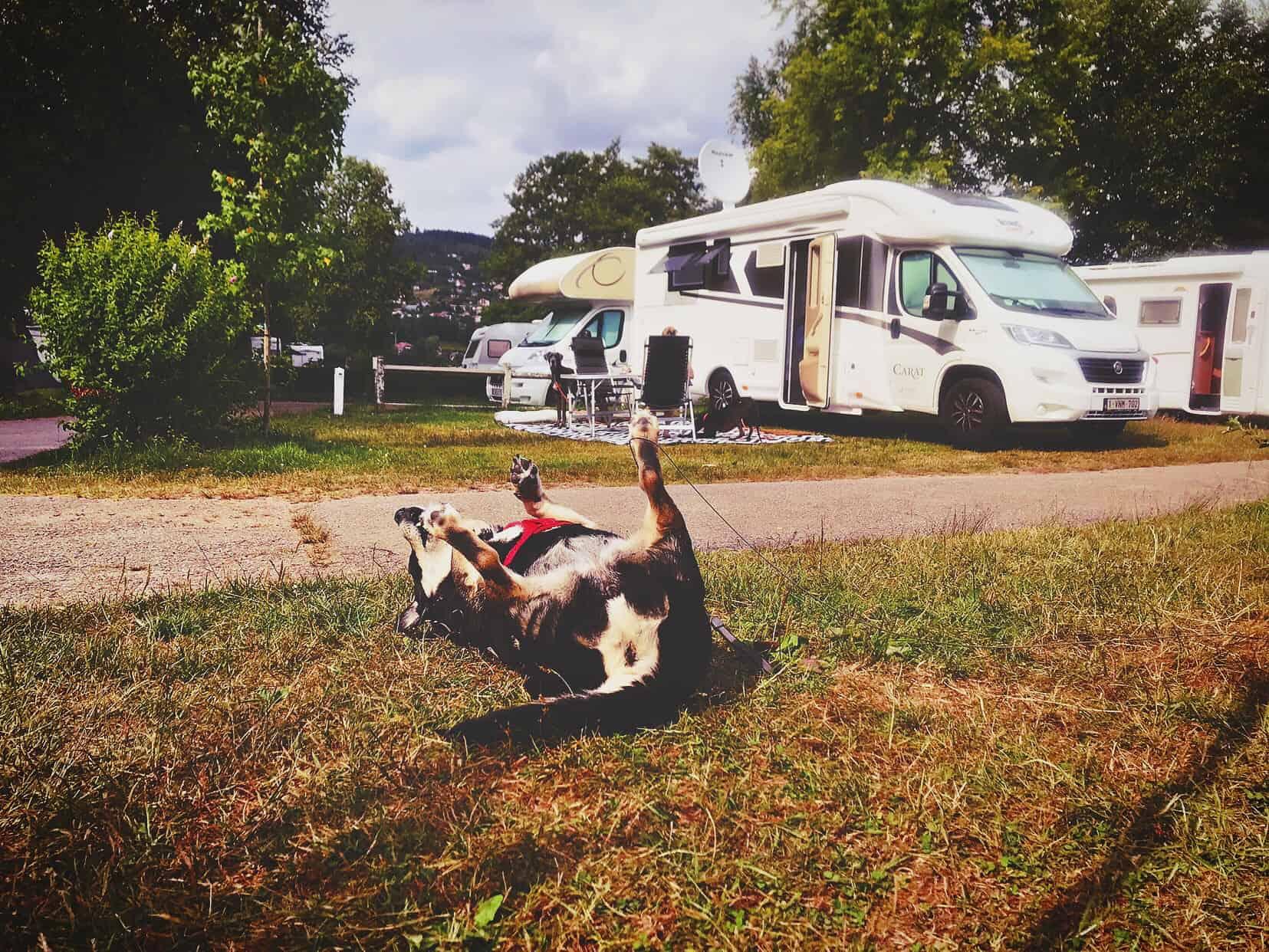 Camping Hund Gerardmer