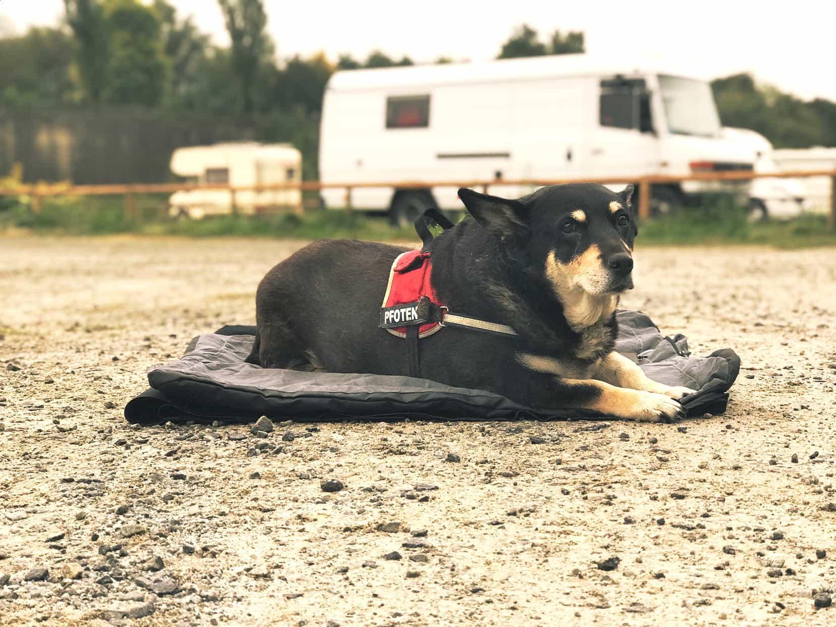Wärme für alte Hunde