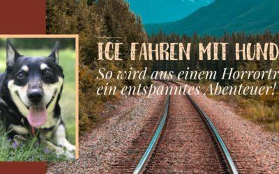 ICE fahren mit Hund – Tipps von der Anreise bis zum perfekten Sitzplatz im Zug