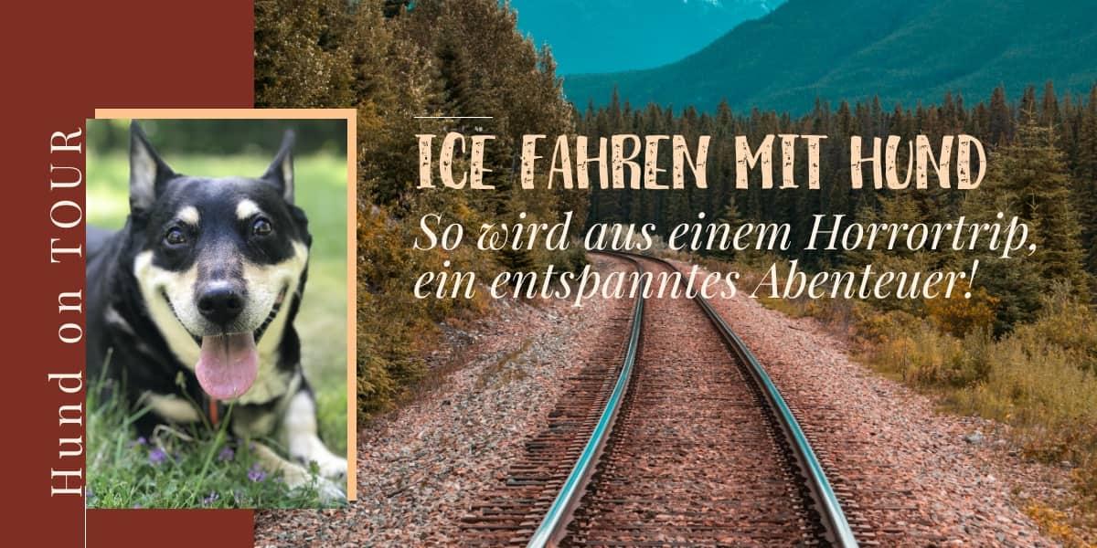 ICE fahren mit Hund