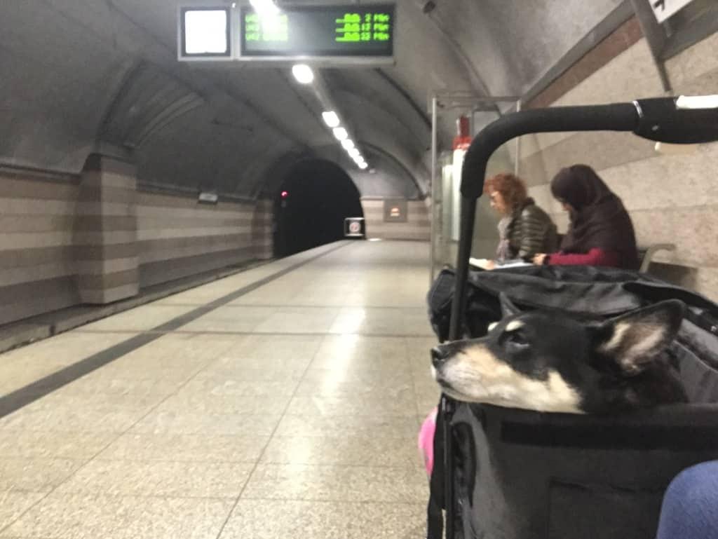 Zugreise mit Hund