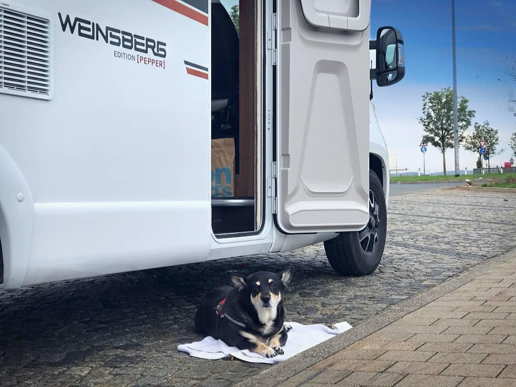 Mister Pepper, Wohnmobil mit Hund im Test