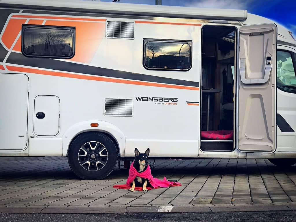 Weinsberg Pepper mit Hund