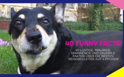 40 skurrile, traurige und lustige Fakten rund um den Hund