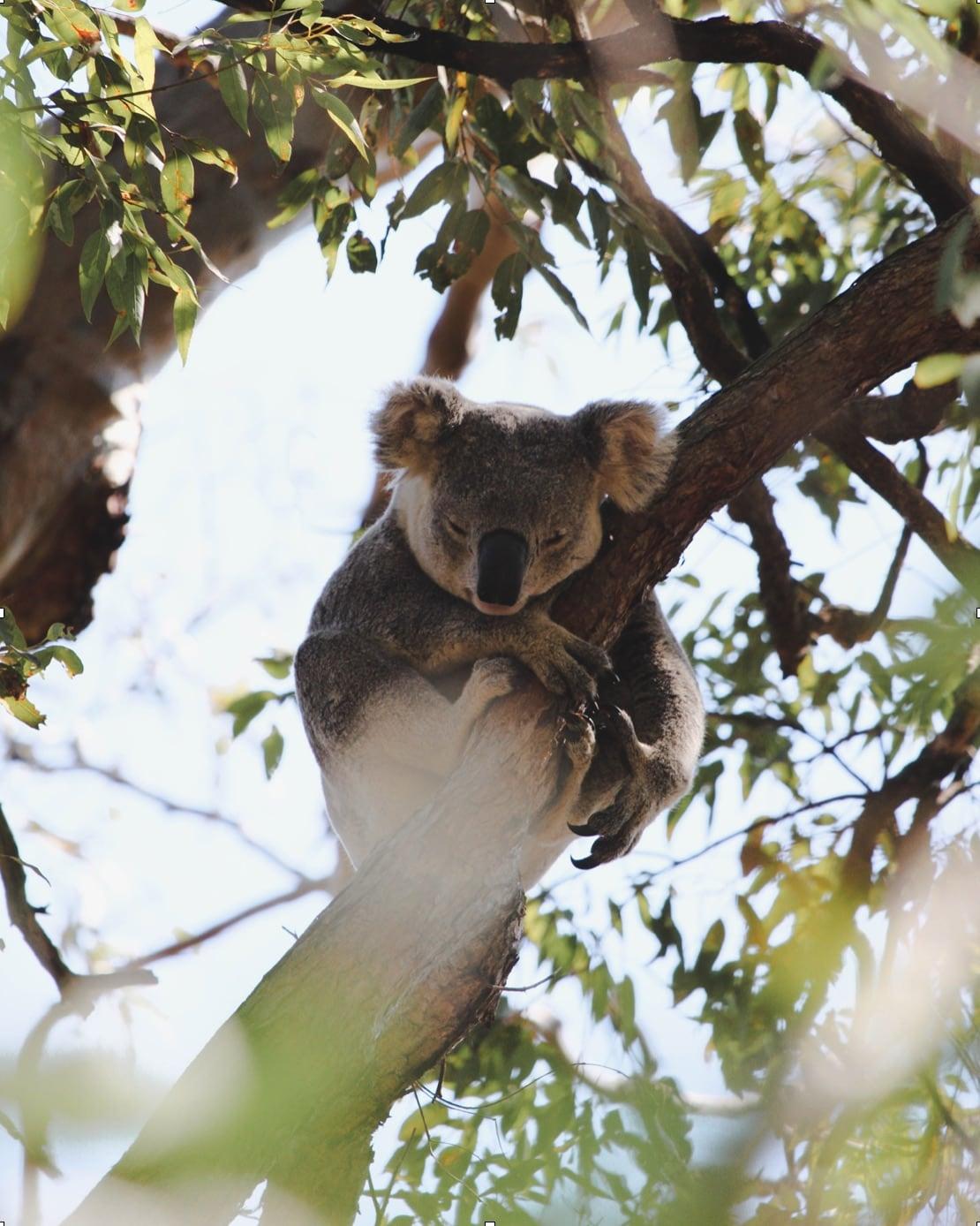 Insider Wissen Australien für Camper