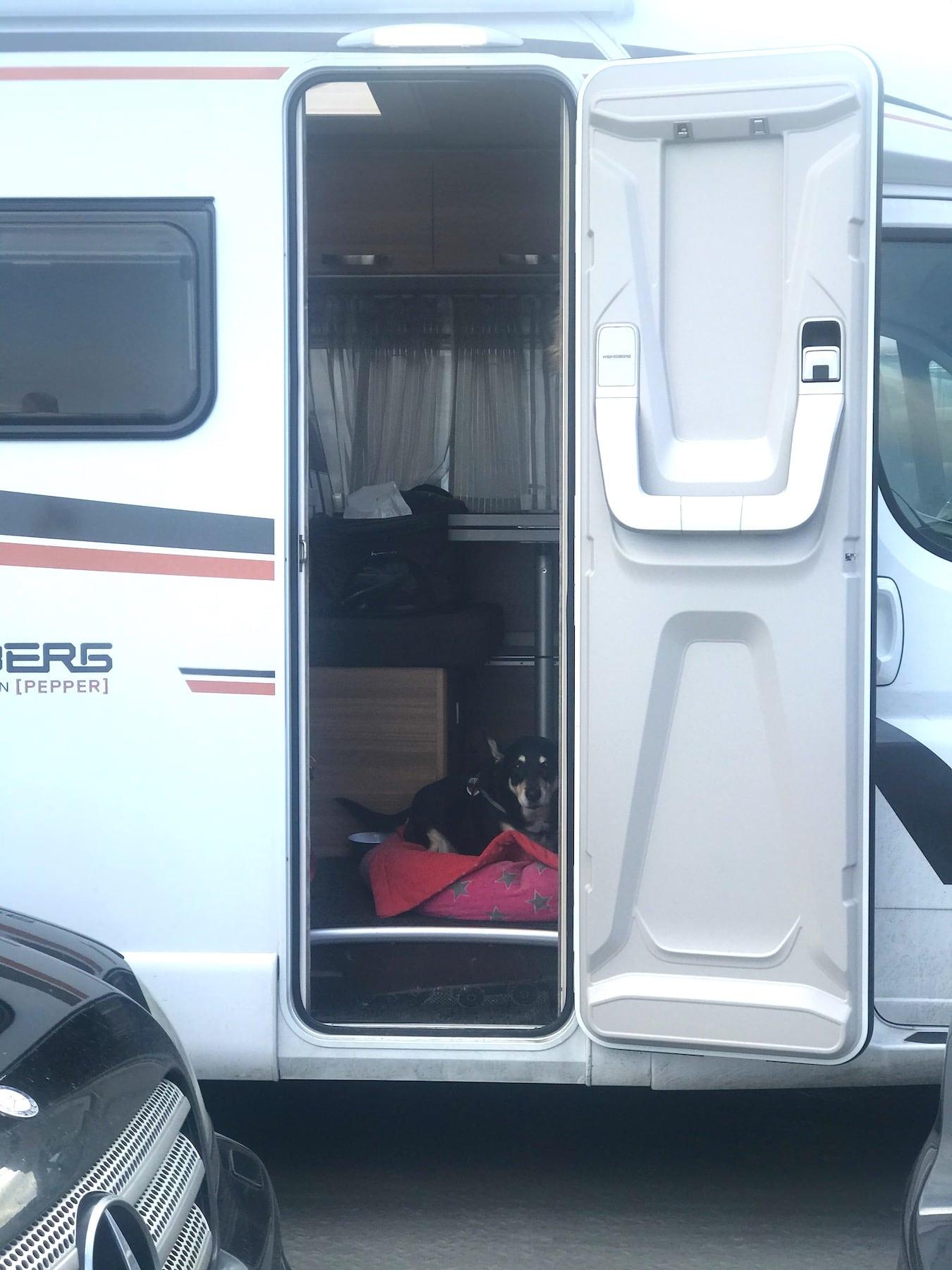 Fähre fahren als Camper mit Hund