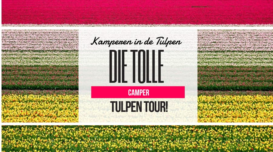 Tolle Camper Tulpen Wohnmobil Tour