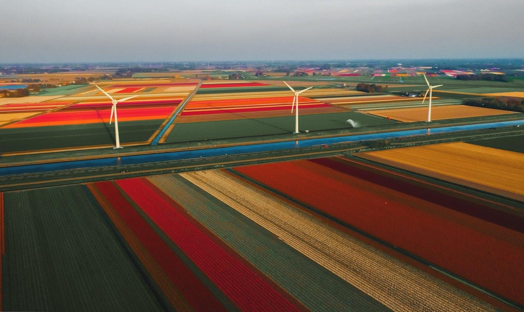 Tulpen Felder besuchen mit dem Wohnmobil Holland