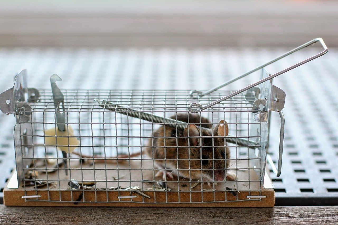 Maus Ratte fangen im Wohnmobil