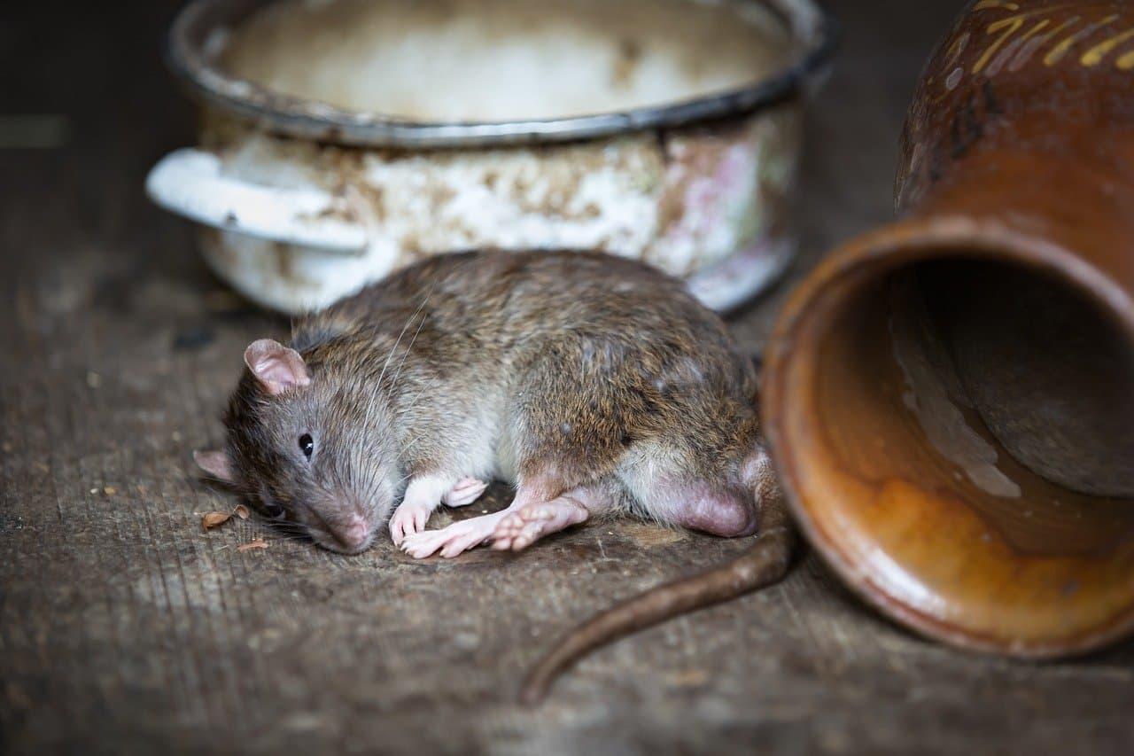 Tote Maus im Wohnmobil