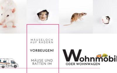 Mauseloch auf Rädern – Mäuse und Ratten im Wohnmobil oder Wohnwagen