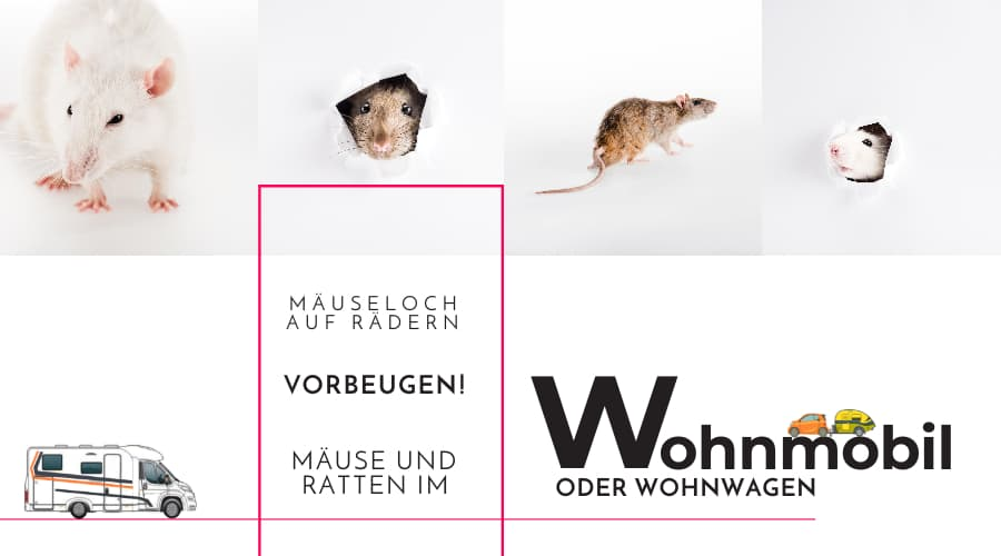 Mäuse und Ratten im Wohnmobil / Wohnwagen vorbeugen