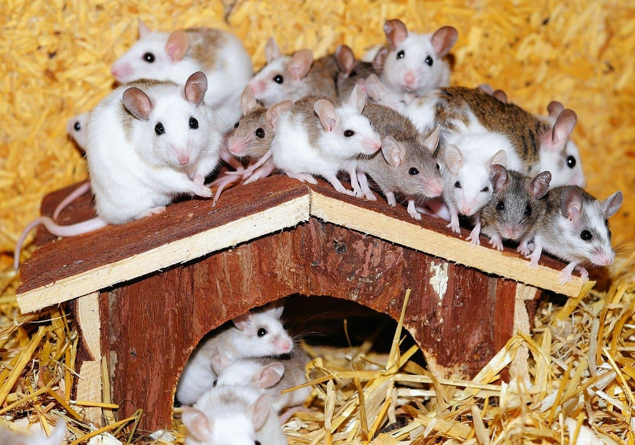 Hilfe bei Mäusen oder Ratten im Wohnmobil/ Wohnwagen