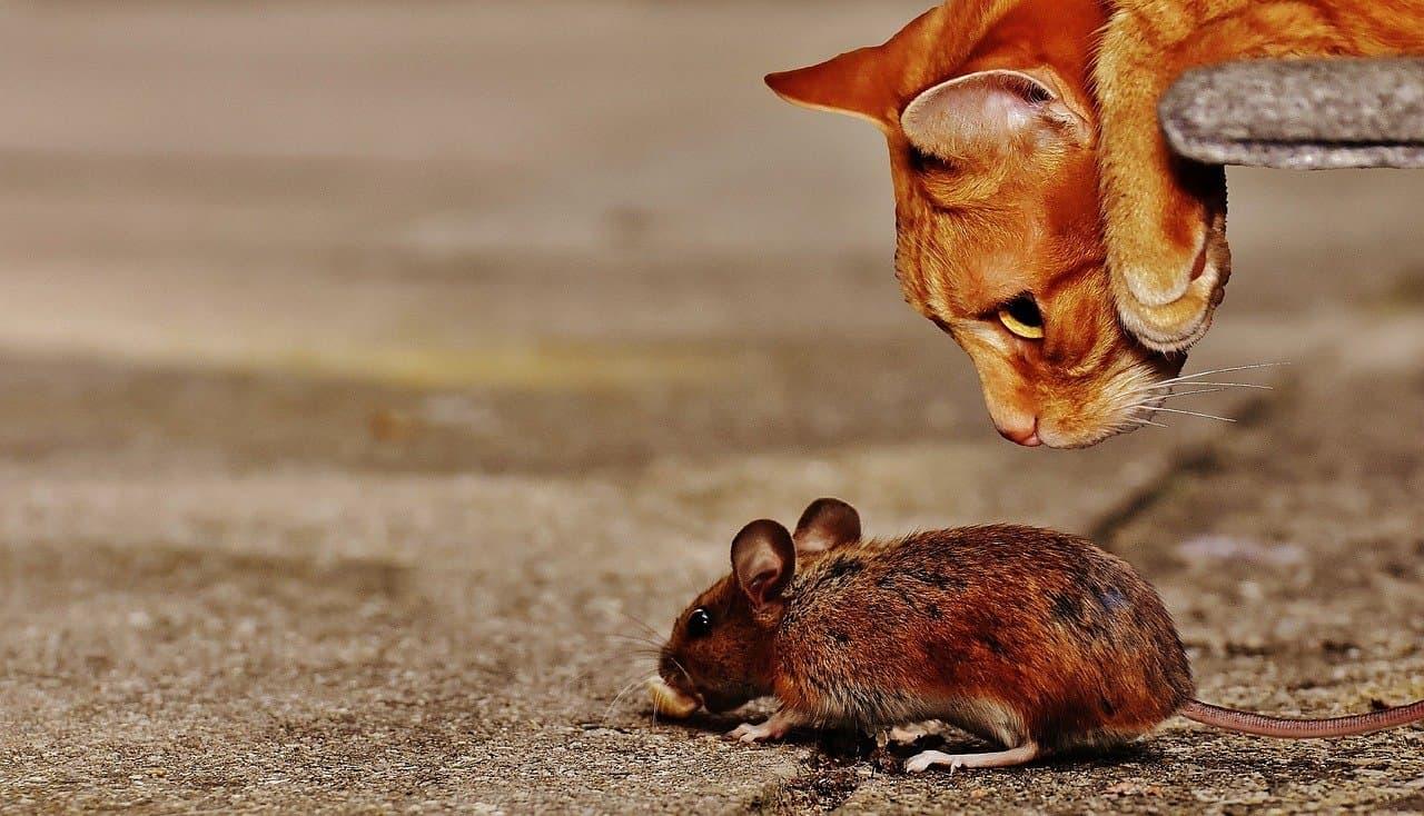 Katze gegen Mäuse im Wohnmobil
